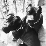 Список потенциально опасных пород собак