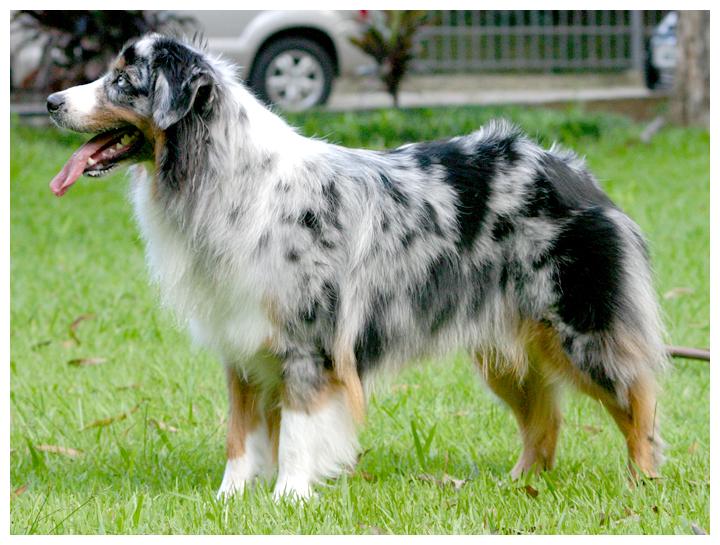 Средние собаки 🐶: ТОП 25 пород с фото и описанием -