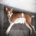 Чем и как кормить беременную собаку