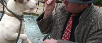 Чем кормить джек-рассел-терьера: советы по здоровому питанию собаки
