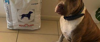 Гипоаллергенный корм для собак