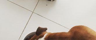 Лучшие корма для аллергичных собак