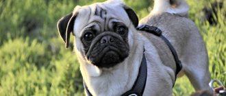 ТОП-30 пород собак, которые любят детей