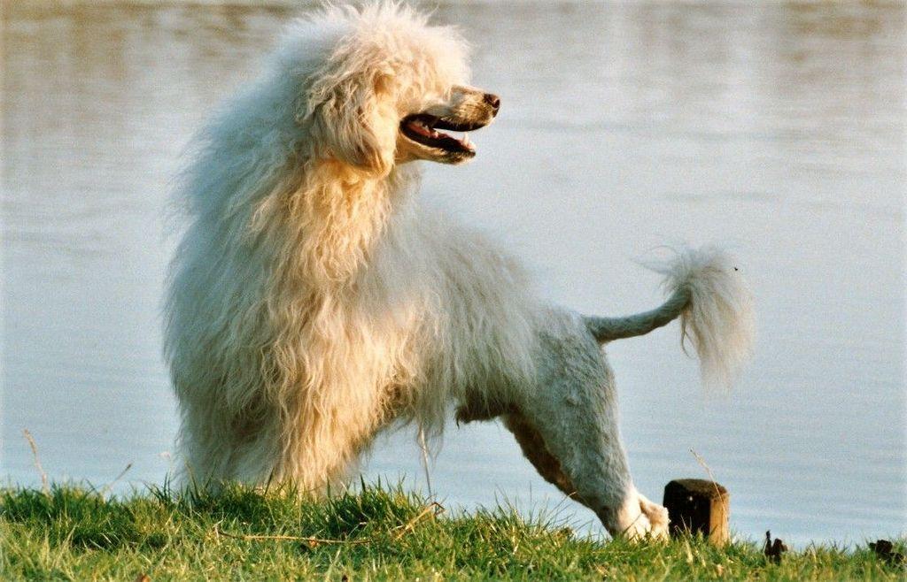 Собака для ребенка: лучшие породы для детей, рекомендации 37