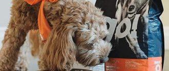 Рейтинг кормов-холистиков для собак