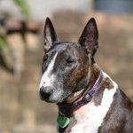 10 самых злых собак в мире