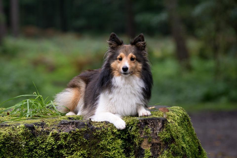 Собака для ребенка: лучшие породы для детей, рекомендации 33