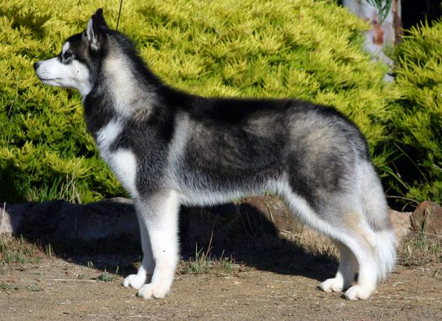 Средние породы собак - Sobaky.Info