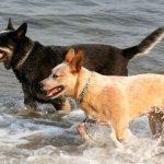 Топ-10 самых умных пород собак
